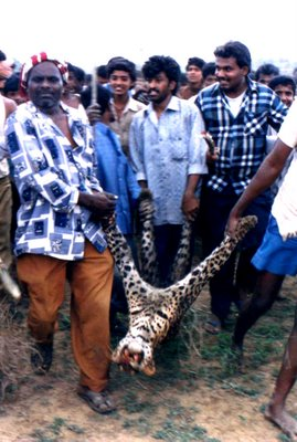 A leopard that strayed outside forest was killed by villagers in Tumkur City in 1998