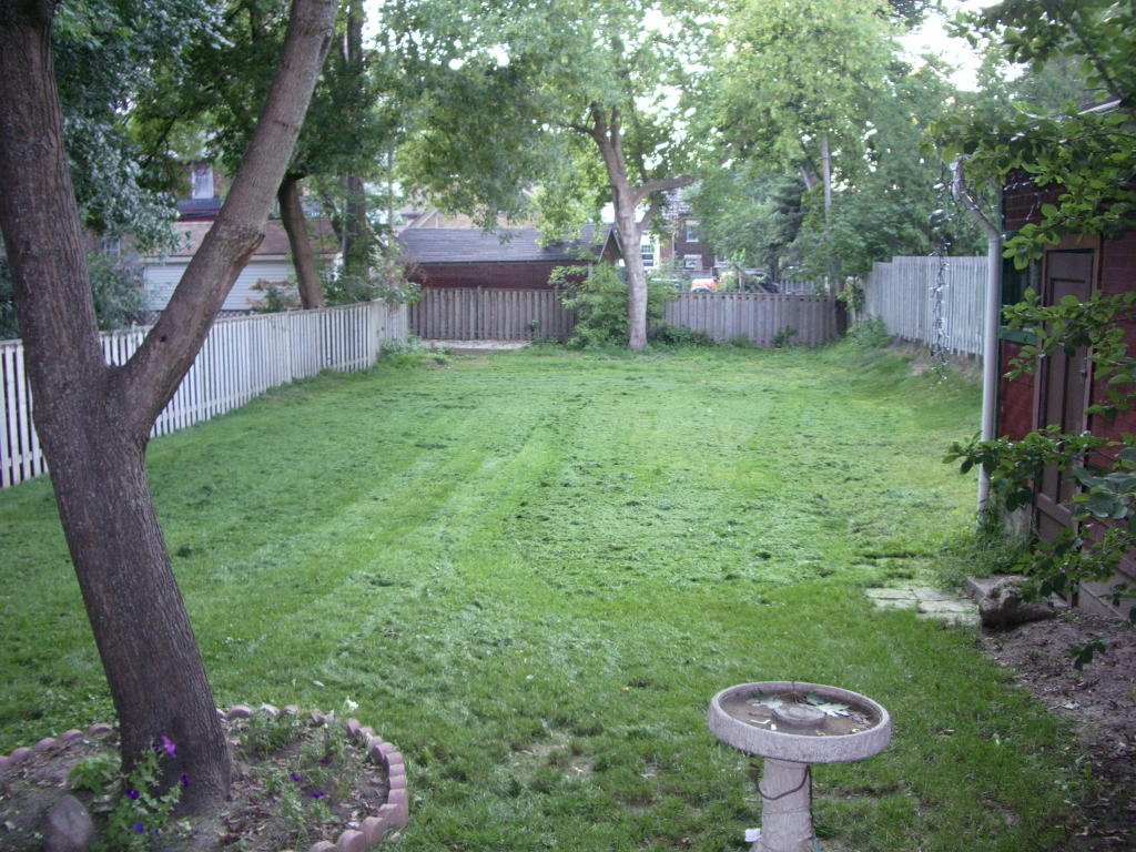 how to keep my lawn green and healthy