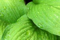 Herbal-Therapeutics
