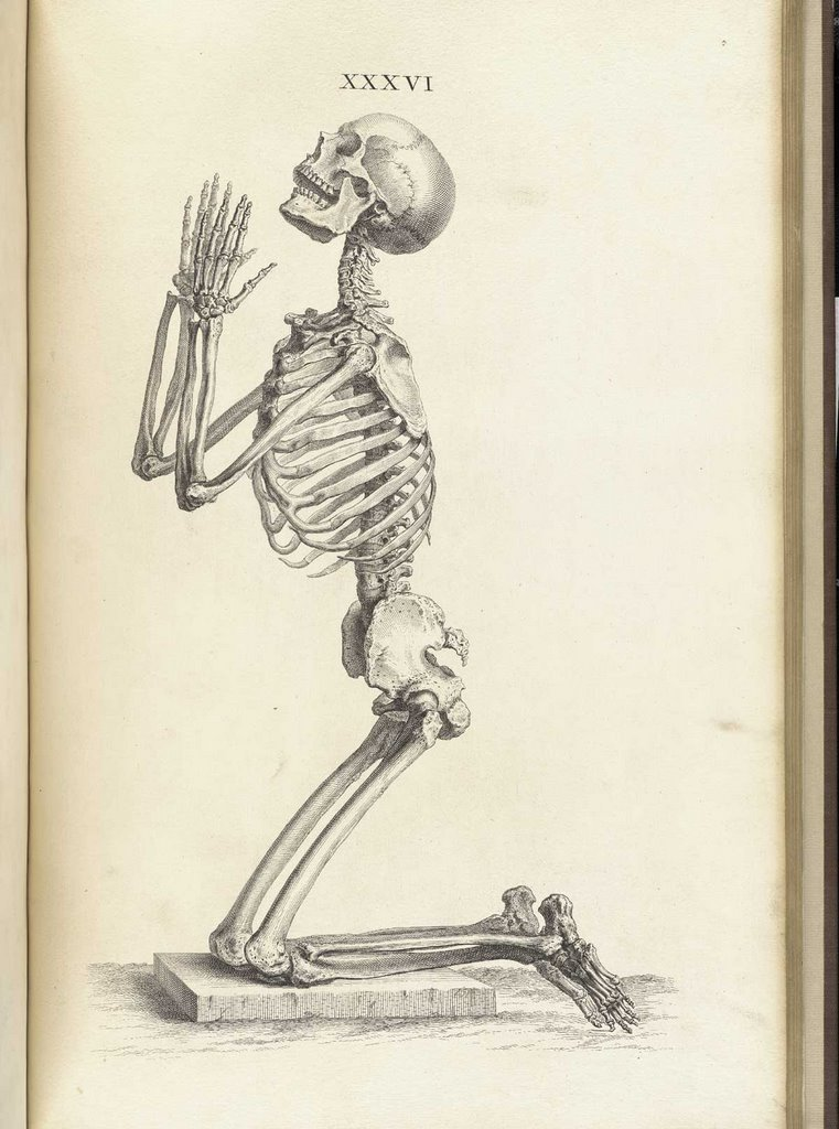 futuratronics: Textos historicos de anatomía humana online