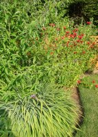 Monarda and Buddleia Davidii and Crocosmia in early July
