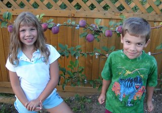 My beauties in front of my espalier apple tree