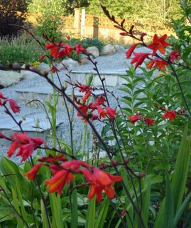 crocosmia and steps