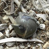 A cluster bomb in southern Lebanon. Many of the cluster bombs that Israel used in the war were made in the United States.<br />
