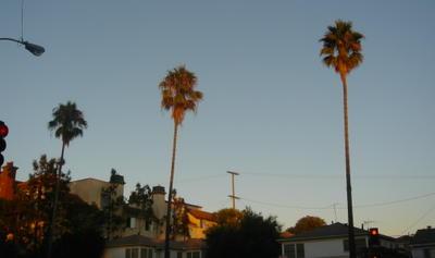 One block from my house, along La Tijera Blvd, 9/6/05