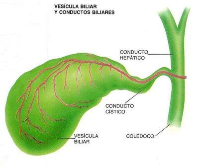 Vesícula Biliar - GASTROCIRUGIA Y CIRUGIA LAPAROSCOPICA DR RAFAEL ...