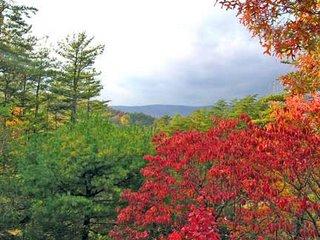 view with dogwood tree