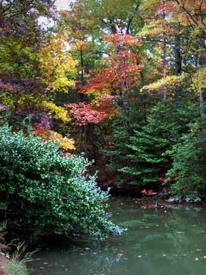 creek with colorful trees