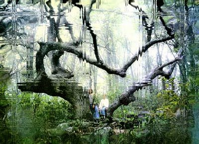 distorted picture of children in forest