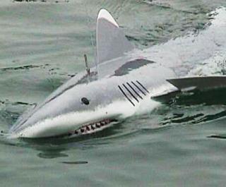 model shark