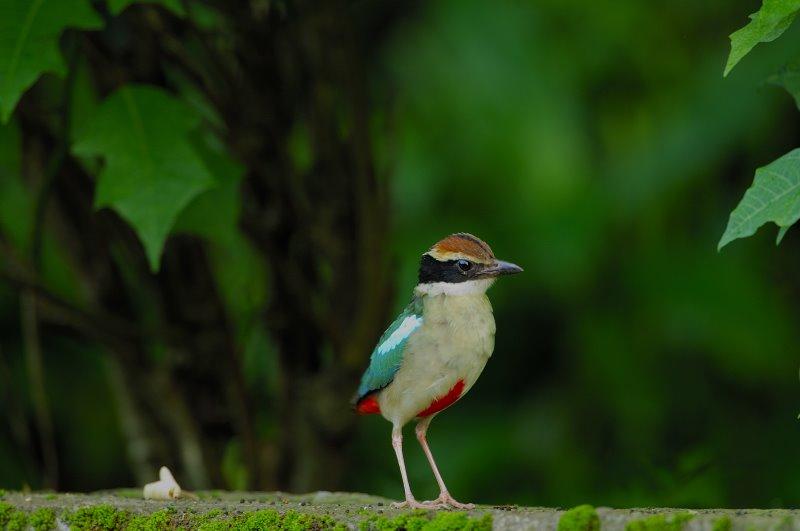 Bird Data Logger : Dl birding