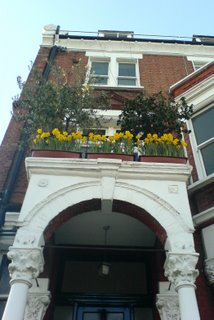 Daffodil balcony on Sutherland Avenue