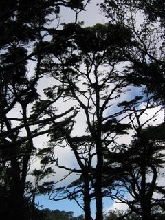 The trees in Sintra
