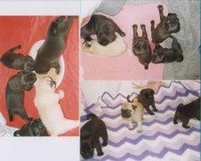 Molly's pups
