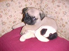 Buddy as a puppy