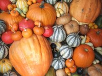 Pumpkin display at Tyntesfield