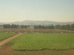 Small Farm- Irvine