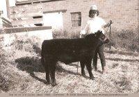 4-H calf