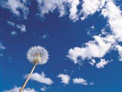 Quando até as sementes sonham com o céu, nao poderemos também fazê-lo?