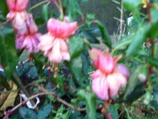 blurry fucshia