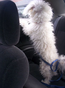 buddy in the car