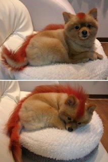 Lifesize Firefox
