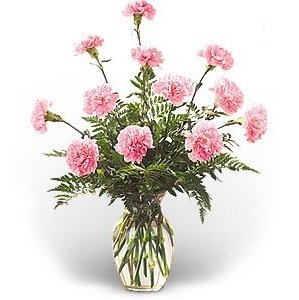 pink carnations cyberkitty india