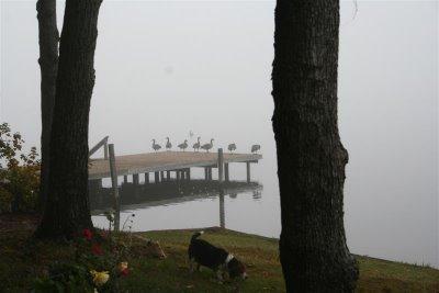 beagle & geese