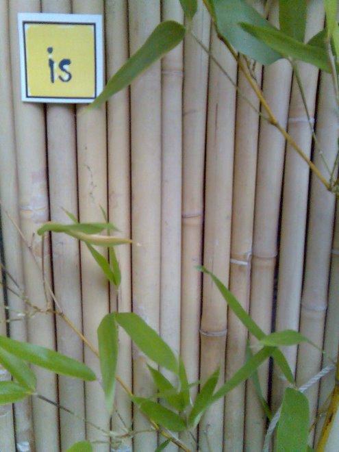 Fairytale Bamboo