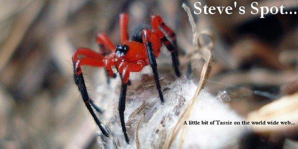 Steve's Spot...