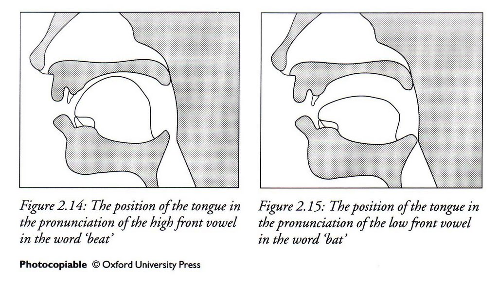 New learning times article saundz the visualizations update the traditional mouth diagram ccuart Image collections