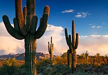 "The ""superintendents of the desert"" silently rule in God's country..."