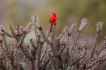 Birdy!!!