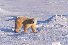 A polar bear's plea...