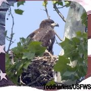 "One of ""NCTC"" Nestlings 2006"