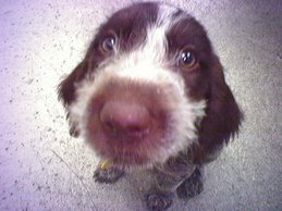 Mocha, our puppy