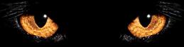 topengdigital