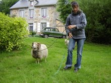 Eco-Friendly Lawnmower