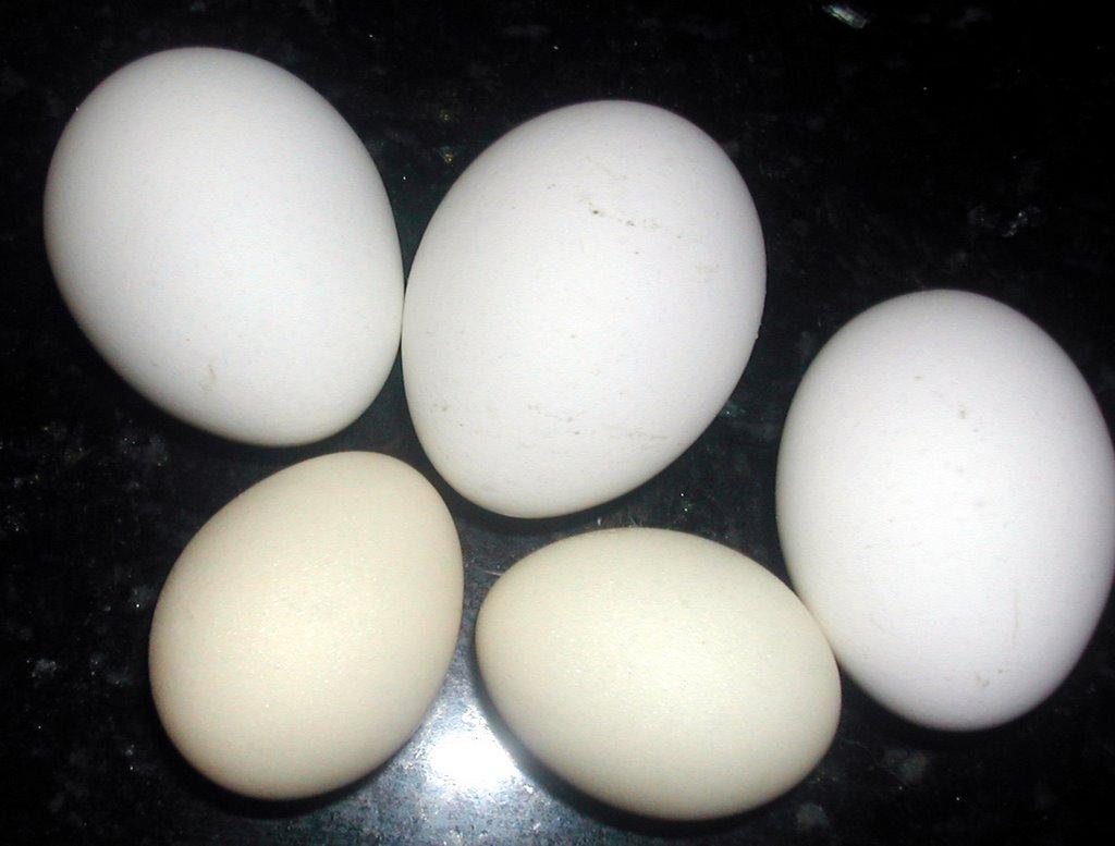 Bantam eggs | La Gring...
