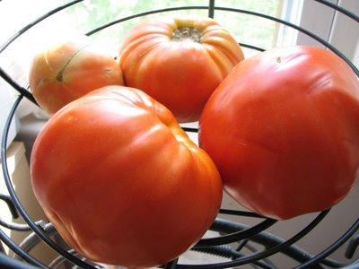 Tomatoes Ripening Merrily.