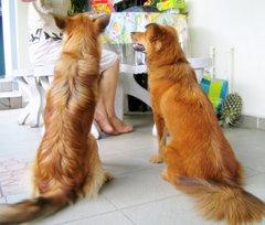 LawMan's Dogs