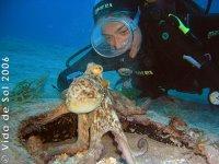 Octopus Ténérife