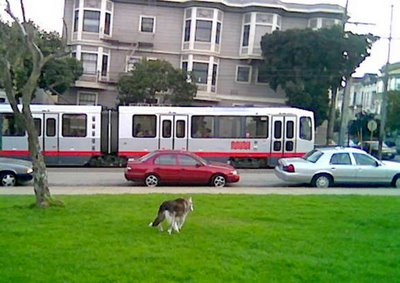 Muki in Duboce Park, watching a MUNI train go by