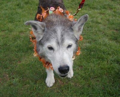 Muki Jacques celebrates Halloween 2006