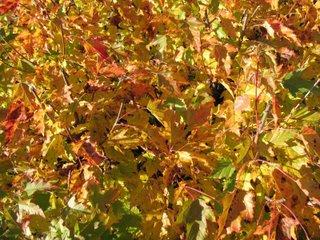 Löv i höstfärger