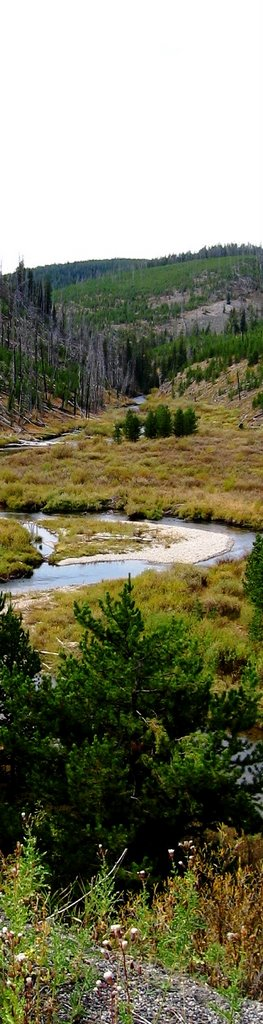 Fly fishing in yellowstone national park the run is on for Yellowstone park fishing report