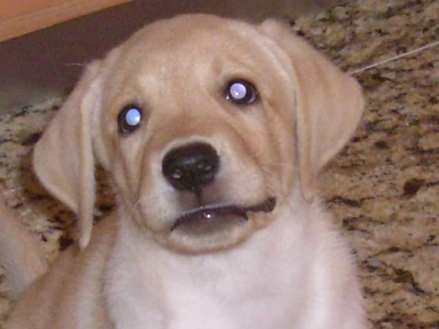 el perro de mi primo