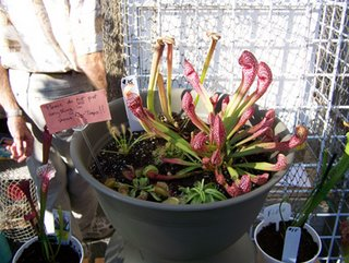 Venus Flytrap basket compliments of the Fly-Trap Farm