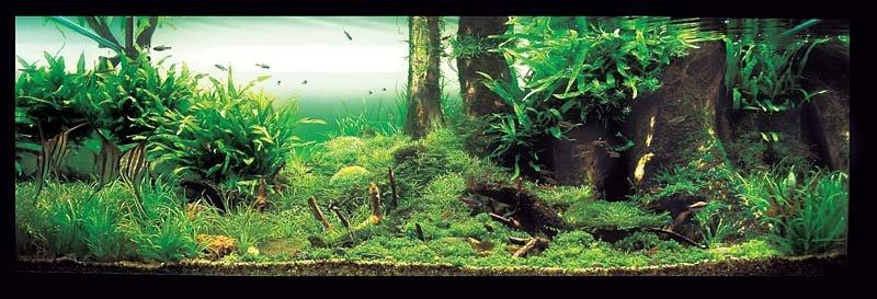 Aquatic Eden - Aquascaping Aquarium Blog