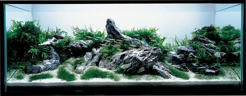 2006 Aqua Design Amano (ADA) Aquascaping Contest Winners (1 10)